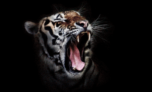 Badematte Tiger